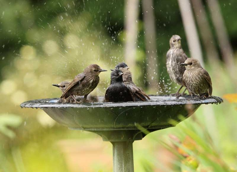 Best-Bird-Bath-Reviews