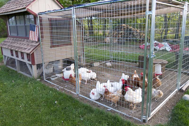 Best-Chicken-Coop-Reviews
