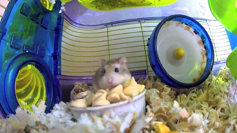 Best-Dwarf-Hamster-Cage-Reviews