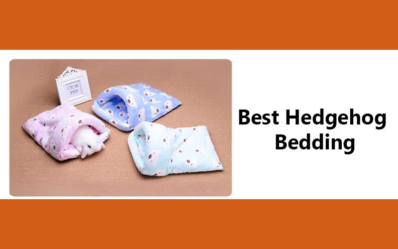 Best-Hedgehog-Bedding