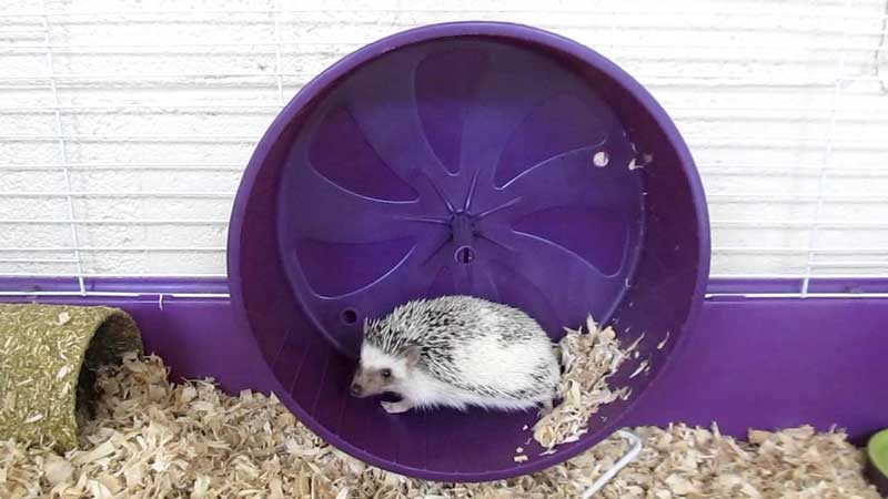 Best-Hedgehog-Wheels