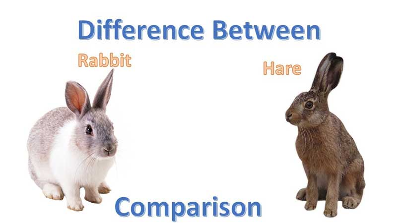 Hare-vs.-Rabbit