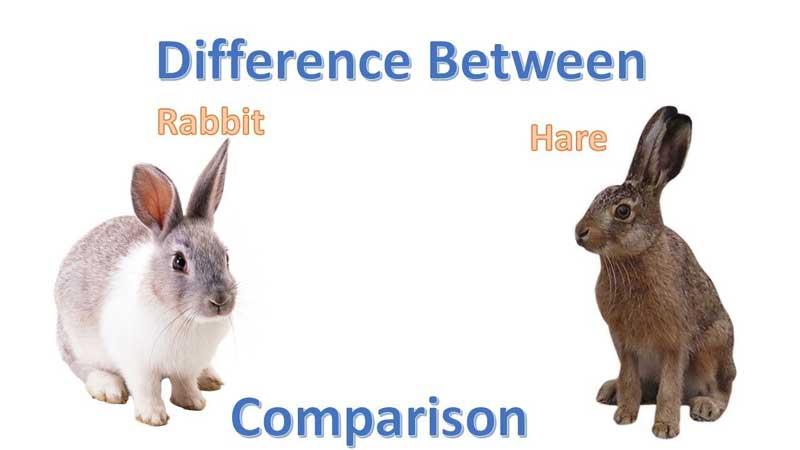 Hare-vs.-Rabbit