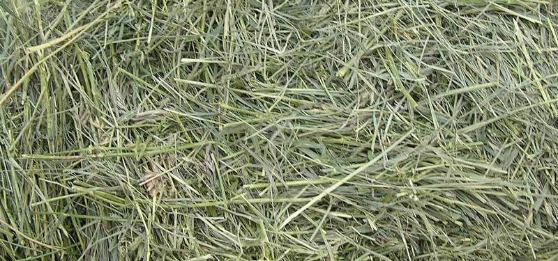 Hay-or-Grass