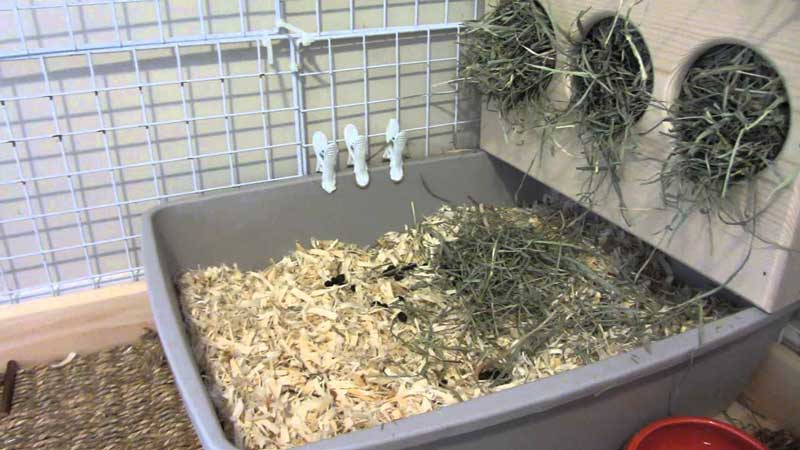 Rabbit-Litter-Box