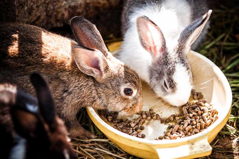 Rabbit-Pellets