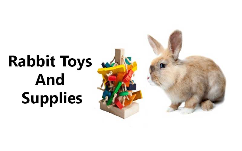 Rabbit-Toys-and-Supplies