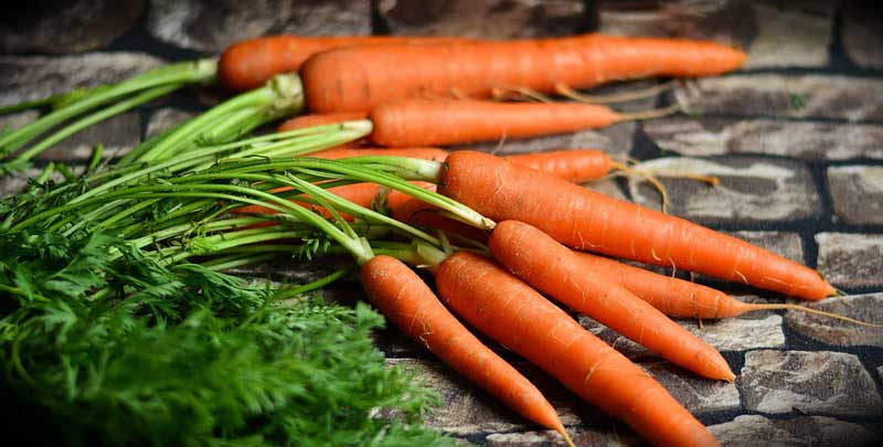 Rabbit-Vegetables