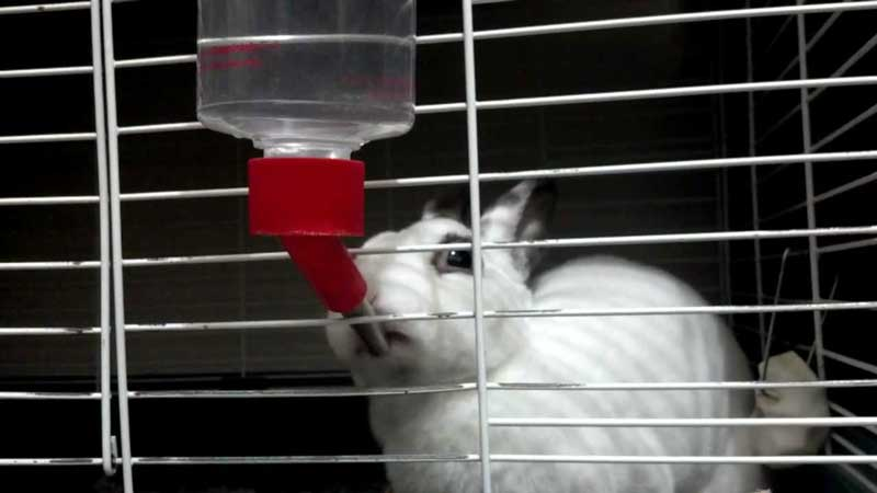 Rabbit-Water