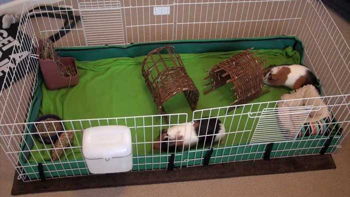 best-guinea-pig-cage-for-two