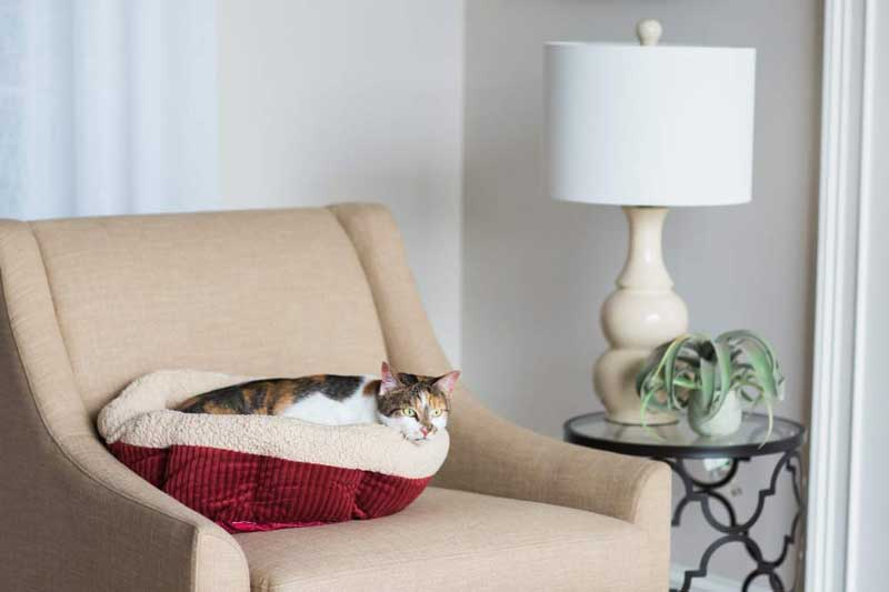 Best-Cat-Beds-Reviews