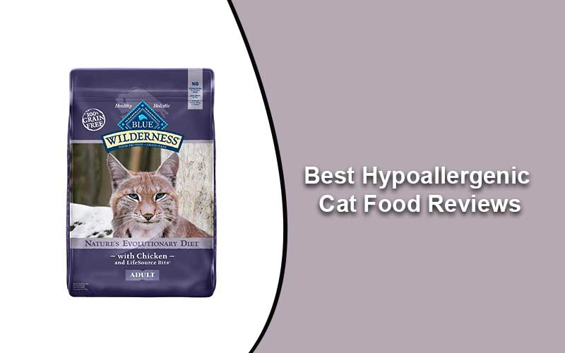 Best Cat Food 2020.Best Hypoallergenic Cat Food Reviews Selected For 2020