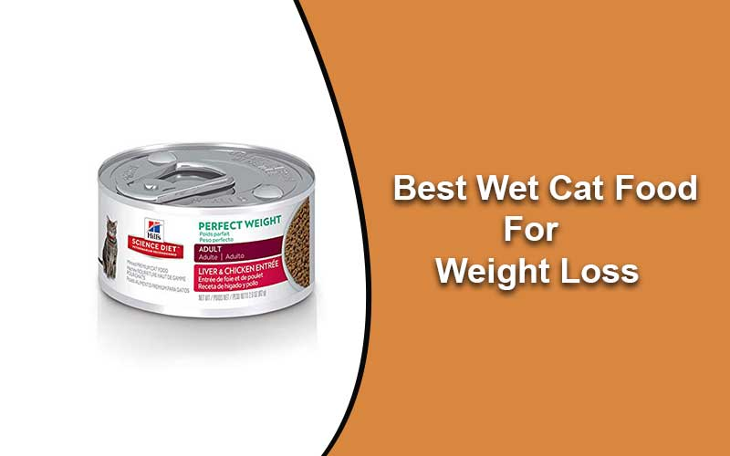 Best-Wet-Cat-Food-for-Weight-Loss