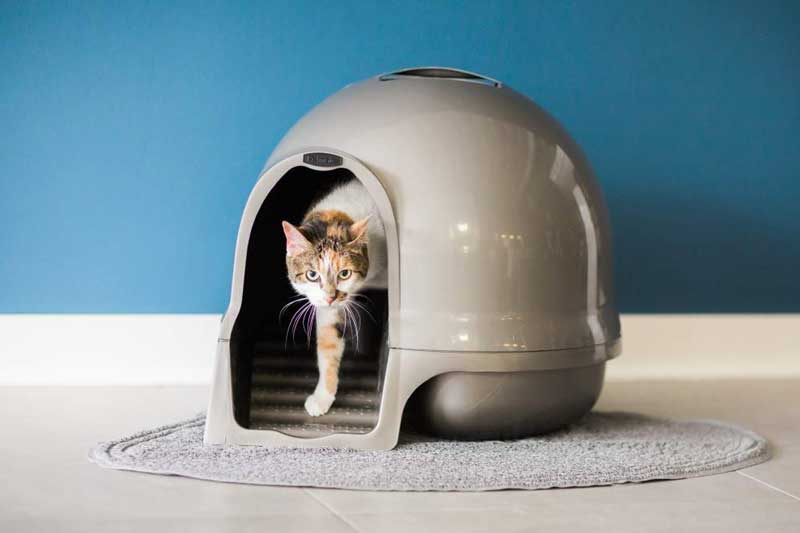 Best-Litter-Box-for-Apartment