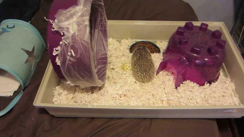 How-To-Keep-a-Hedgehog-Warm