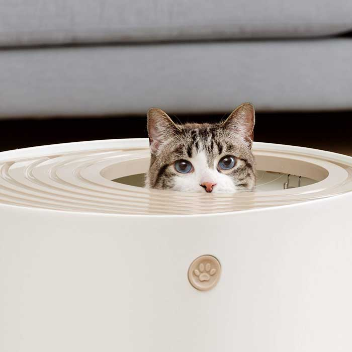 What-Makes-a-Great-Multi-Cat-Litter-Box