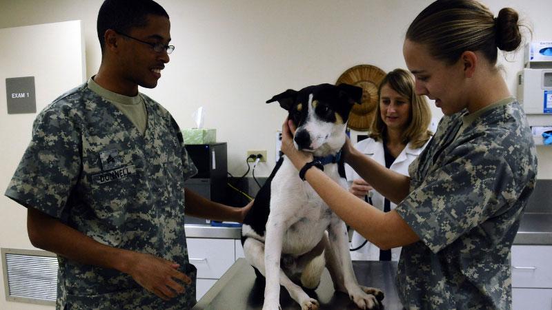 24-Hour-Emergency-Veterinary-Clinics