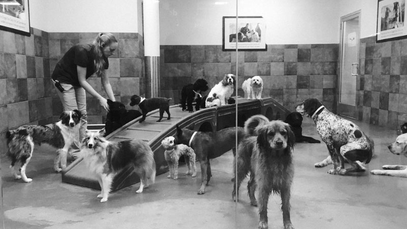 Doggy-Day-Care