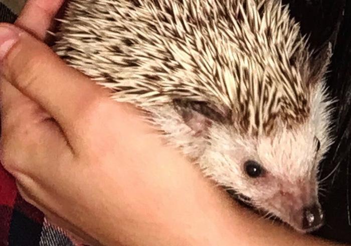 Take-Care-Of-A-Hedgehog