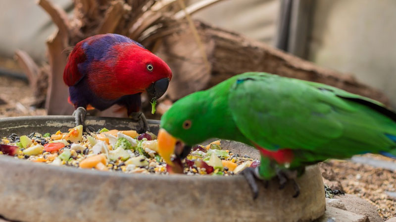 Best Parakeet Food