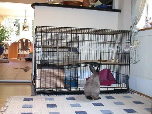 How to Convert a Dog Crate into a Rabbit Cage