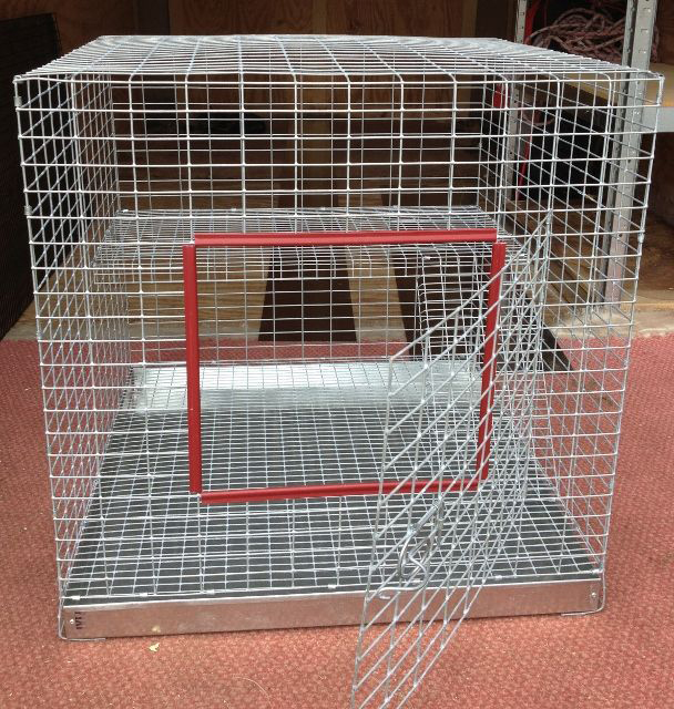 Cage floor and bedding