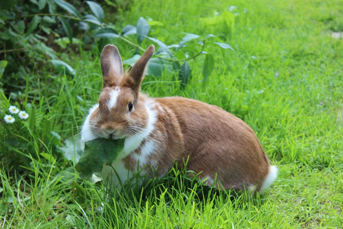 Feed grass to your rabbits