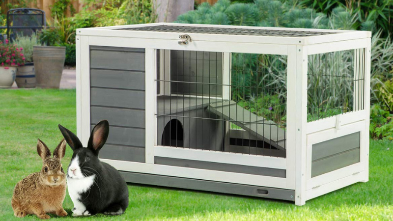 How Much is a Rabbit Cage in Different Online Stores