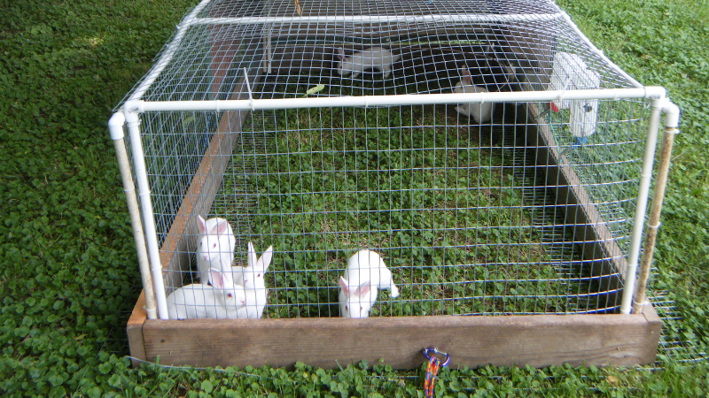 How to Build a Wire Rabbit Cage
