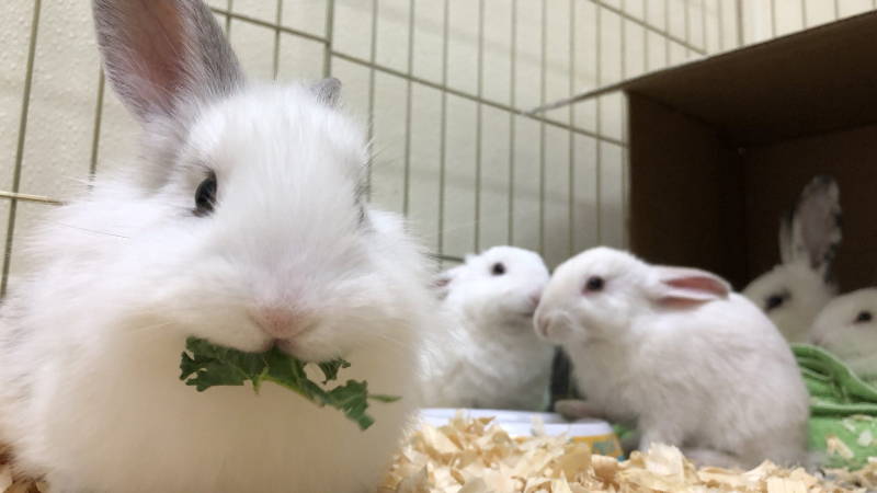 How to Build an Indoor Rabbit Cage