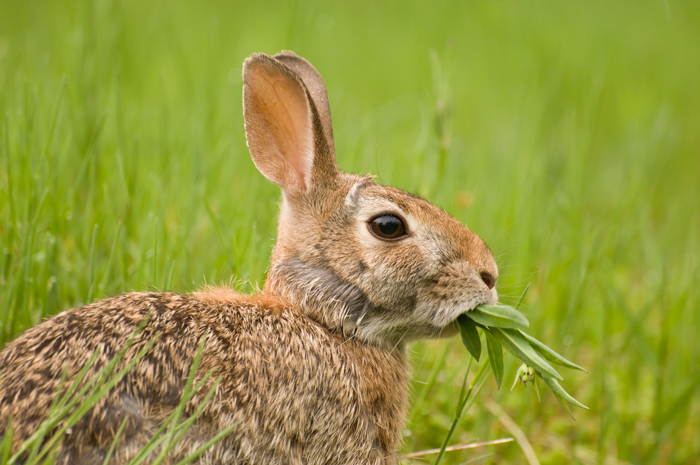 How to feed grass to your rabbits