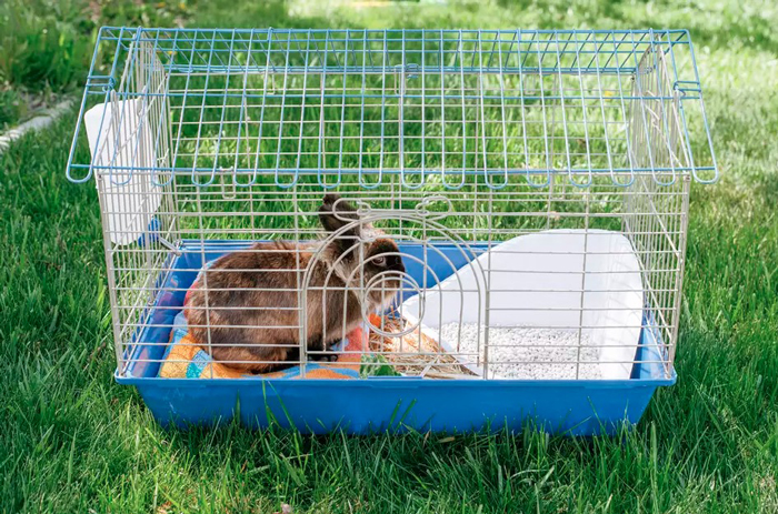 Rabbits Need in Their Cage