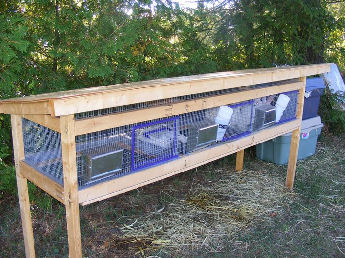 Stand rabbit cages