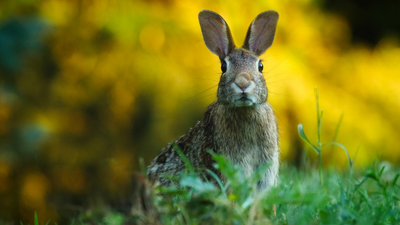 What to Feed Wild Rabbits
