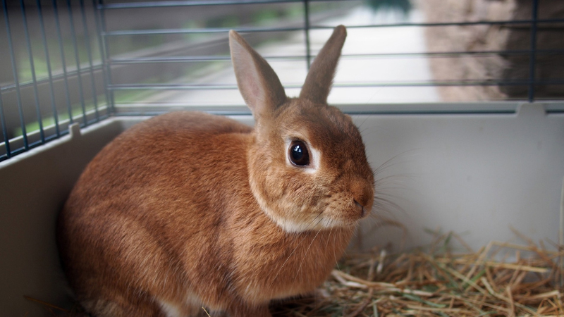 How Much Space Does a Rabbit Need in a Cage