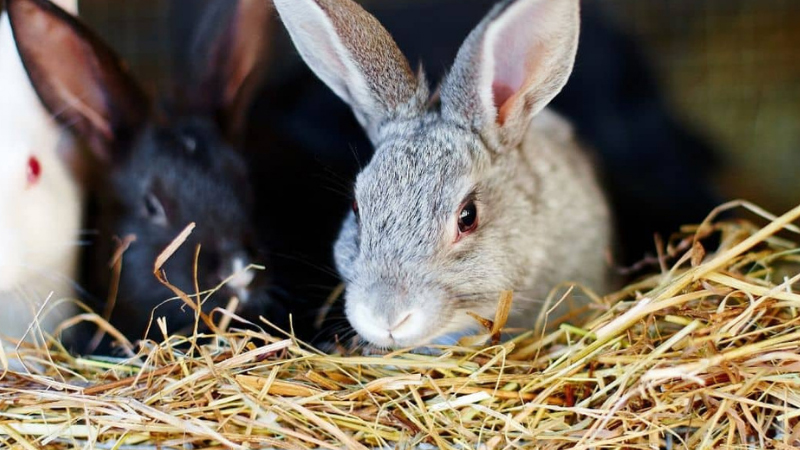 How to Remove Rabbit Urine Stains From Cage