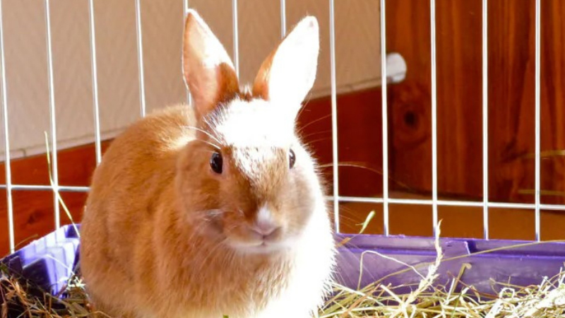 How to clean a rabbit cage with vinegar