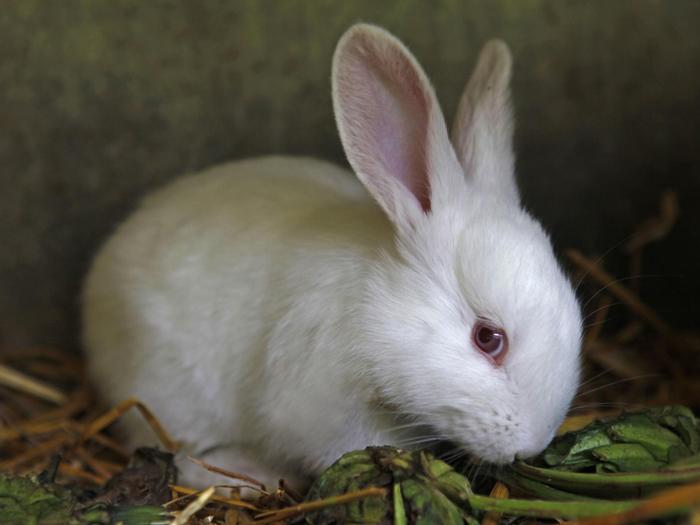 Rabbit Cage size important