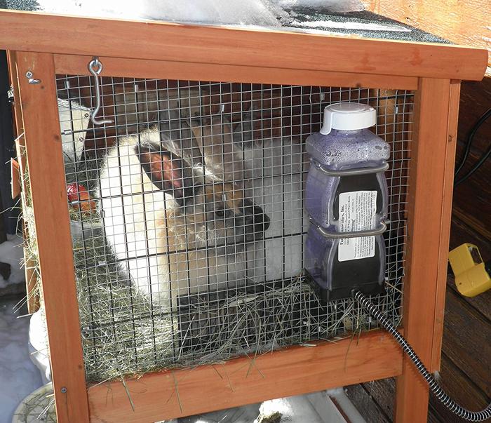 Rabbit Water Bottle